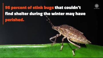 Polar vortex may have killed some harmful, invasive pests
