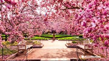 National Cherry Blossom Festival March 20-April 14