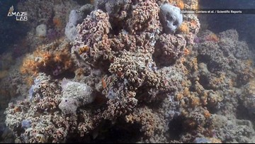 Mamma Mia! Scientists Just Found a Coral Reef Off Italy's Coast