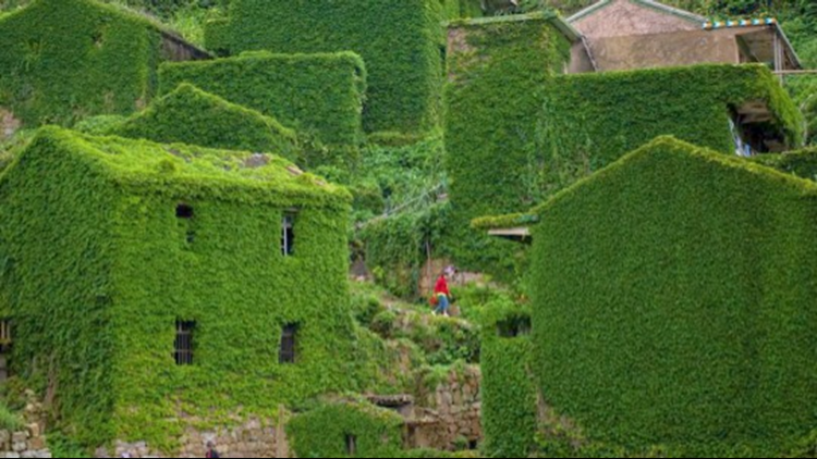 This Abandoned Chinese Village Turned Entirely Green!