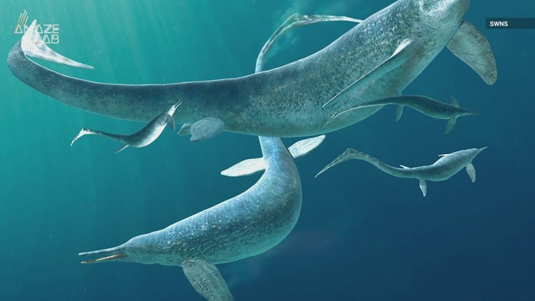 Ancient Sea Creature Unveiled