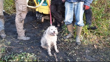 Dog Rescued After Being Trapped Underground in Badger's Den