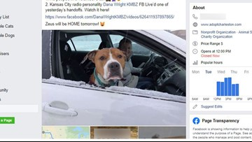 Stolen pitbull reunited with family thanks to 2,000-mile volunteer relay