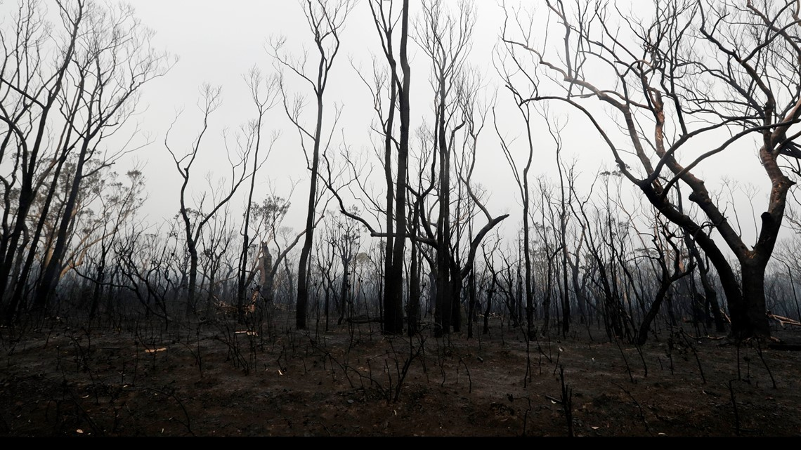 Wildfires could have a multibillion-dollar impact on Australia's economy