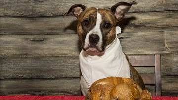 9 Thanksgiving foods that will make your dog sick