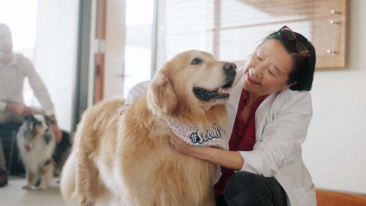 A $6 million thank you: Man buys Super Bowl ad to thank vet school that saved his dog