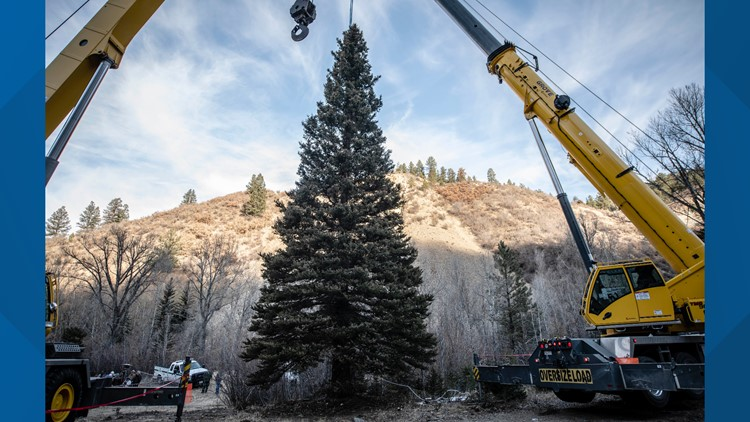 Christmas tree US capitol New Mexico