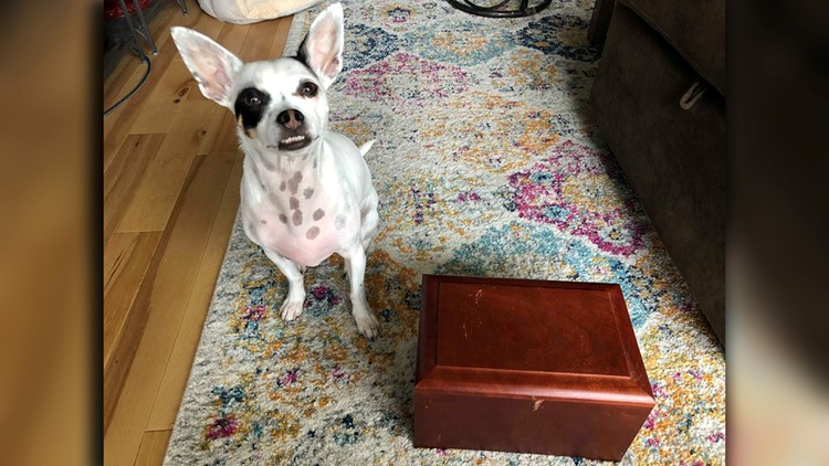 Sasha Martin Dog and box of ashes
