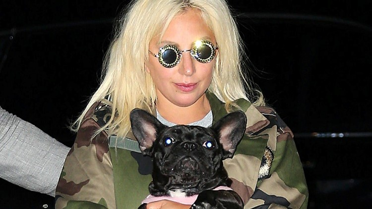 Lady Gaga's Two Dogs Recovered After Being Kidnapped