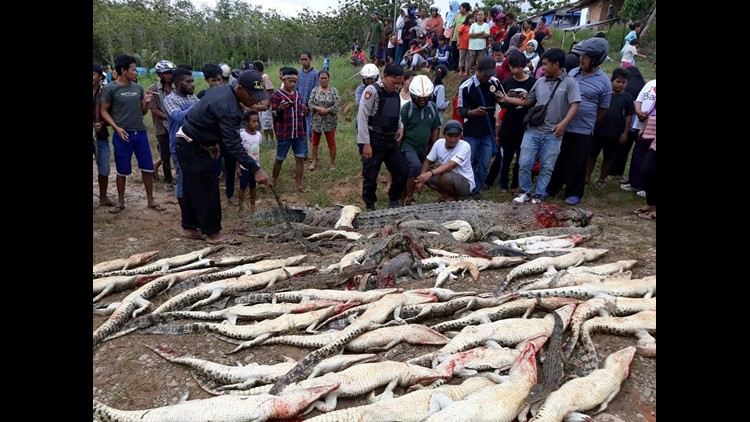 Bloodthirsty mob slaughters 300 crocodiles in revenge after villager eaten alive