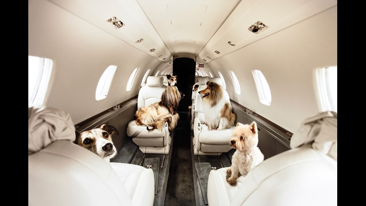 Traveling with a pet? Should you fly commercial or private? | 9news.com