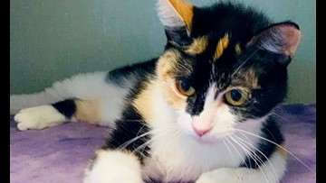 Looking to adopt a kitty? Here are 4 cool cats ready for new homes right now in Denver