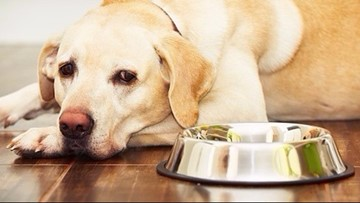 Recall of potentially dangerous dog food expanded by Hill's