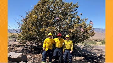 Crews save famed mystery Christmas tree from Arizona brush fire