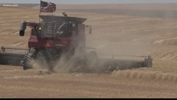 Farmers harvest crops for neighbor with Stage 4 cancer
