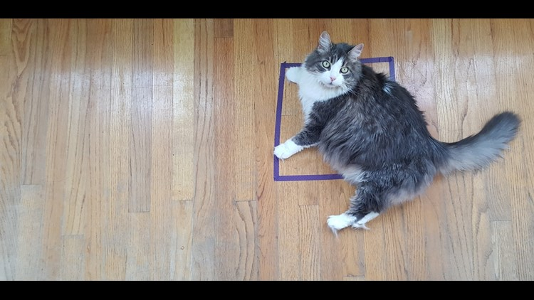<p>Twitter recently blew up with posts wondering about the feline fascination with taped squares on the ground. An animal behavior expert explains it's not magic that draws Fluffy to the #CatSquare.</p>