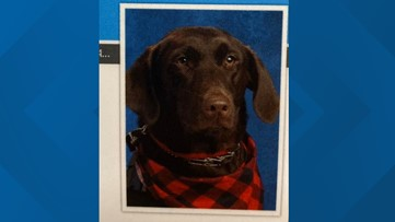 Service dog poses for adorable first school picture