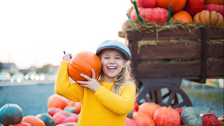 autumn pumpkin patch background harvest fall festival pumpkins