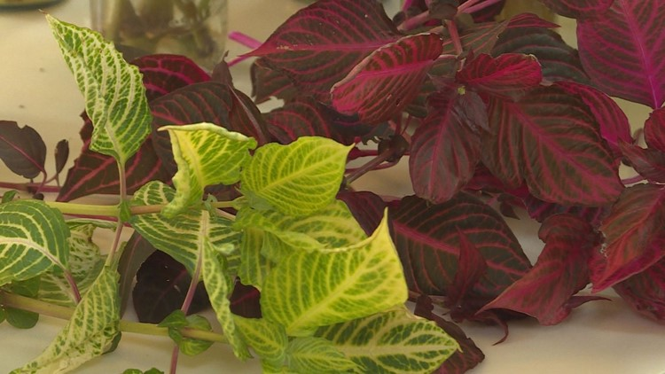 Proctor's Garden: Caring for your cuttings