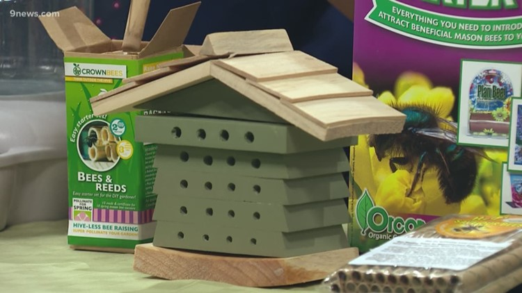 How to make your garden more welcoming to pollinating mason bees