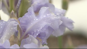 Trying weather week exposes Mother's Day planting fallacy
