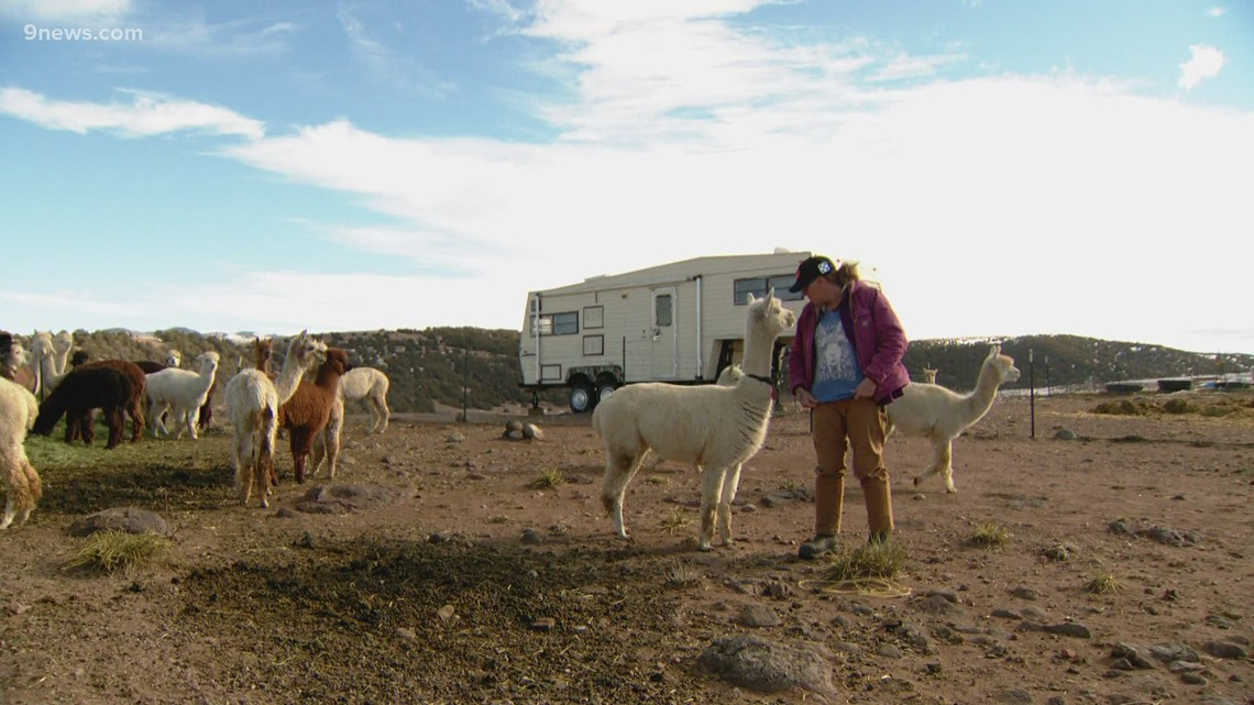 In conservative Colorado, Tenacious Unicorn Ranch a safe haven for trans community – and 180 alpaca
