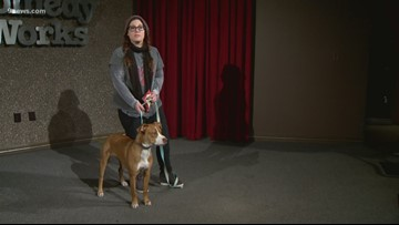 Pit bull advocates push cities to repeal bans on breed