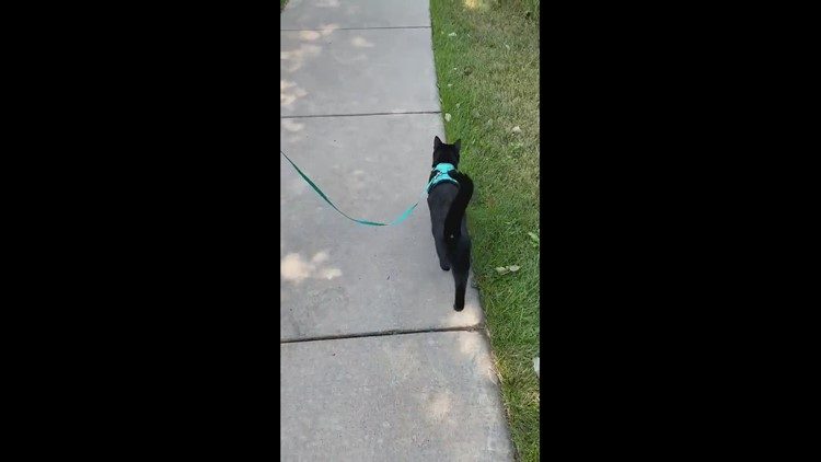 Archie on his morning walk