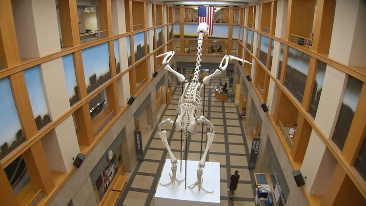 That's not a dinosaur skeleton at Denver Central Libary. It's a giant chicken