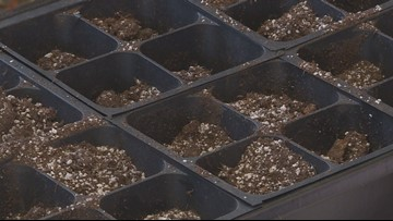 Proctor's Garden: Seed starting savvy