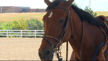 Colorado Horse Park takes steps to protect animals after virus outbreak