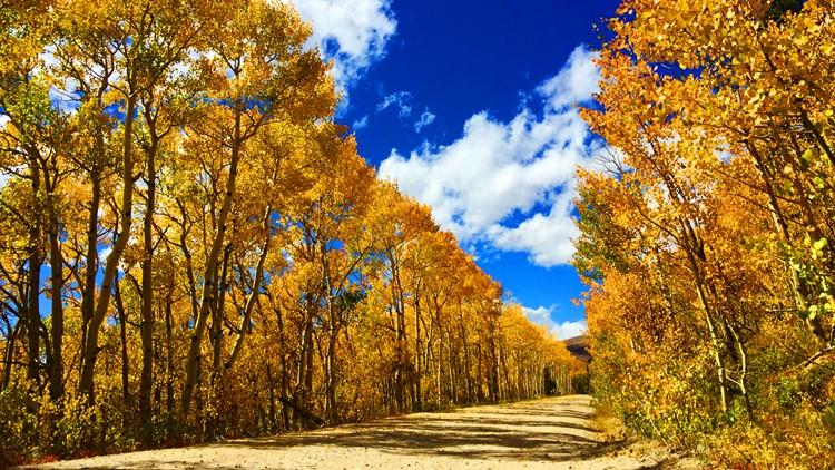 Colorado Fall Colors aspen leaves ward colorado