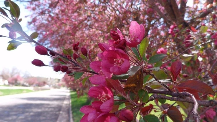 The Best Places To See Colorado S Spring Flowers 9news Com