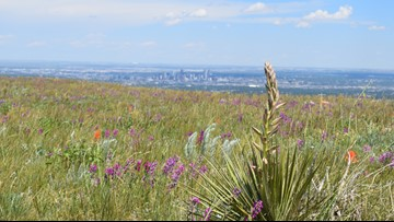 You can see incredible wildflowers on this hike only 20 minutes from downtown Denver