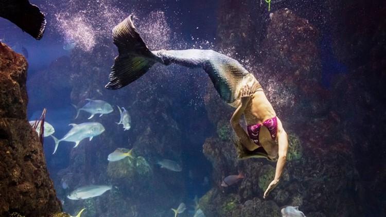 Example of a mermaid appearance at the Denver Aquarium