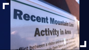'A fight for survival': Trail runner kills mountain lion that attacked him