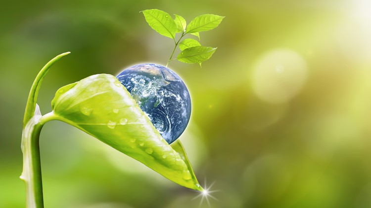 Earth Day Planet earth with beautiful freshness growth tree and drop of water holed by new growth plant on outdoor summer forest bokeh background. Earth image furnished by NASA.