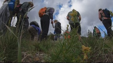 New preservation project has volunteers searching for seeds at Copper Mountain