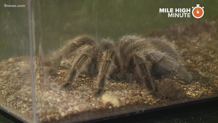 A look inside Colorado's Butterfly Pavilion