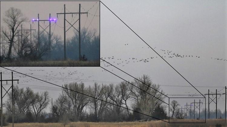 UV Lights and cranes