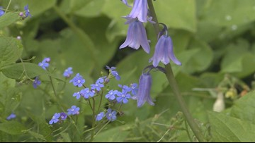 Colorado weather plays havoc with planting