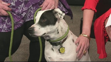 Petline9: Adorable  Dalmatian Terrier mix needs a forever home