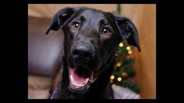 Dumb Friends League offers half off dog adoption fees