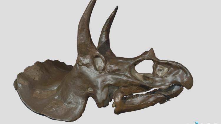 3D Dino Scan