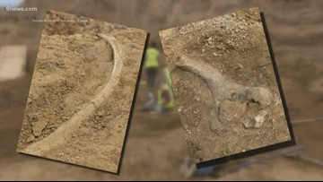 Fossils found at Highlands Ranch construction site are from a triceratops