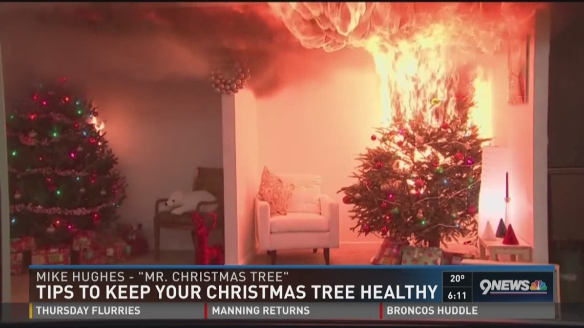 Special Elixir Reduces Risk Of Christmas Tree Fires 9news Com