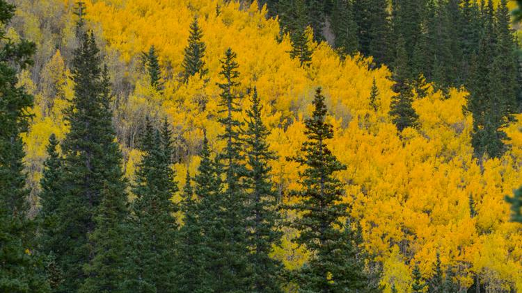 Even an off-year is a good year for fall colors in Colorado. Here's what you need to know.
