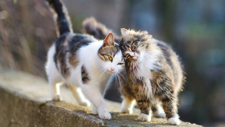 Fort Collins code outlaws outdoor cats, experts say at-large cats unsafe