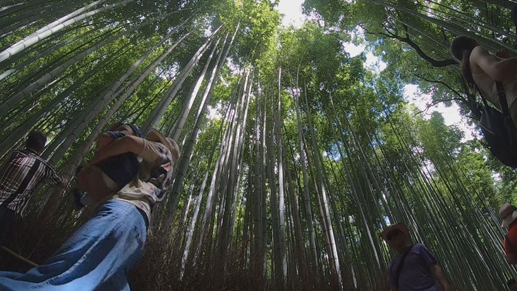 Let us take you inside one of the most amazing forests in the world