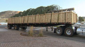 Christmas tree arrives at Outlets at Castle Rock